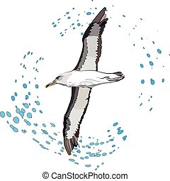 flying albatross - vector illustration of flying sea bird...
