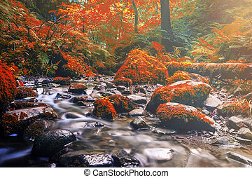 Forest stream running over mossy rocks. Filtered color effect.