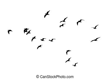 flocks of birds silhouette on a white background