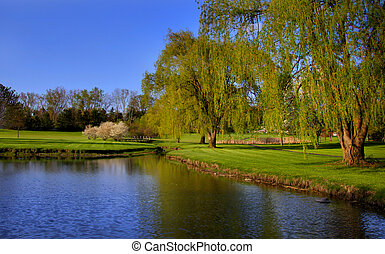 Scenic landscape with willow trees by the pond in spring...