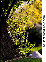 Spring scene - Freshly grown plants and leaves of the trees...