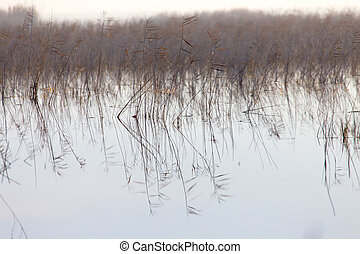 a lake with reeds at dawn in the autumn
