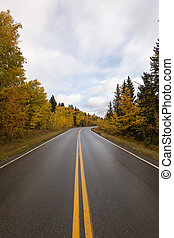 wet road through fall forest in canada
