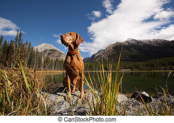 dog siting by a mountain lake