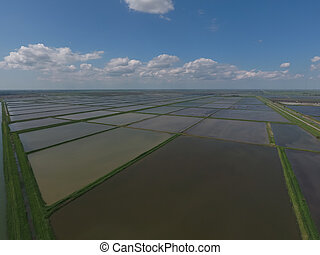 Flooded rice paddies Agronomic methods of growing rice in...