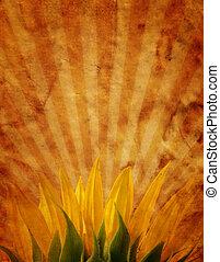 Grunge design with sunflower