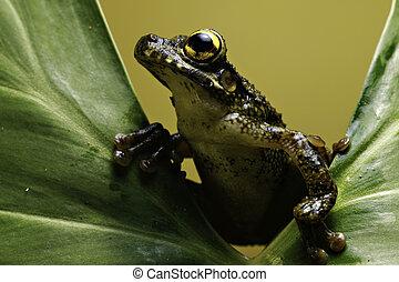 tree frog on leaf amphibian amazon