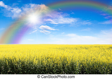 Yellow Field Against Rainbow Sky And Sun Burst - Rows of...