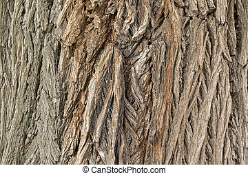 Background photo of texture of old and dry tree bark -...