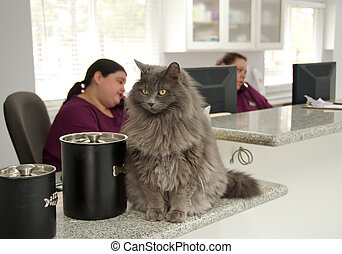 beautiful cat at a vet\'s reception - receptionists on the...
