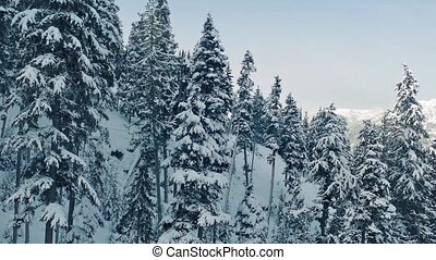 Ascending Snowy Mountain Side - Traveling past snowy trees