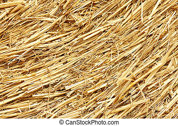 hay background golden