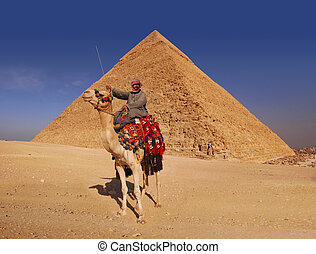 Bedouin and Pyramid - Bedouin and camel in front of the...