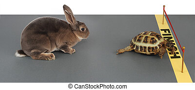 tortoise-hare - turtle winning the race against a rabbit