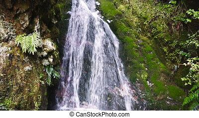Waterfall in tropical rainforest, New Zealand - Secluded...