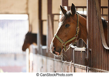 Horse in a stall - The horse peeking out of the stall