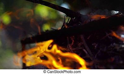 Bonfire fire flame close-up in the day light with green trees background