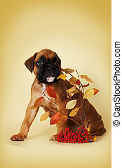 a scared puppy boxer is hiding behind a thin branch with leaves