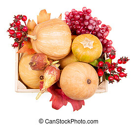 Ripe pumpkin and autumn berries in wooden box on white -...