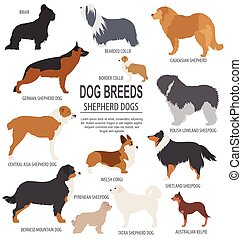 Dog breeds. Shepherd dog set icon. Flat style. Vector...
