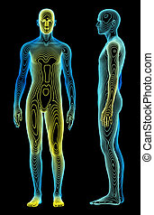 Body Analysis - A medical concept of the human body