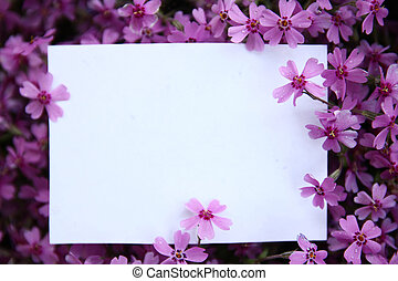 paper with purple flowers - white paper with purple flowers