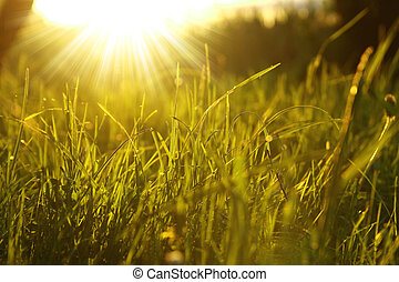 green grass background with sun