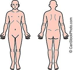 Human body front and back - Vector illustrationOriginal...