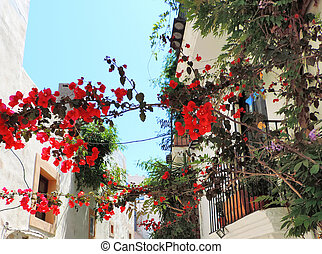 Dalt Vila, historic city of Ibiza. Bougainvillea