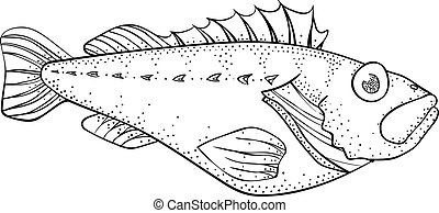 Coloring book: ocean perch
