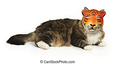 The Great Pretender - House cat on a white background...