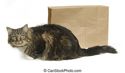 The Cat\'s Out of the Bag - Tabby cat outside of a paper...
