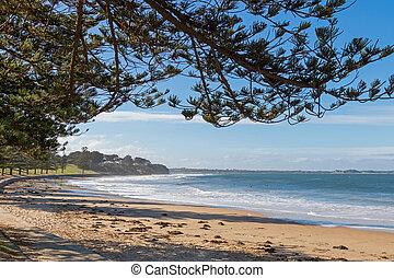 Torquay, oleaje, playa, paseo, por, Norfolk, pino,...