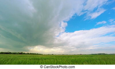 Clouds over a Green Wheat Field - Dark Storm Clouds over a...