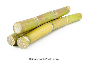 Sugar cane - Close up of sugar cane in isolated white...