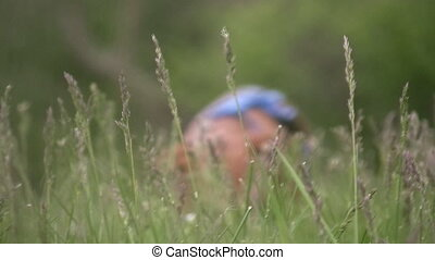 Miniature Dachshund in grass walkin - A low angle shot of a...