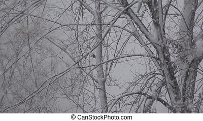 Snowstorm Covering Tree Branches