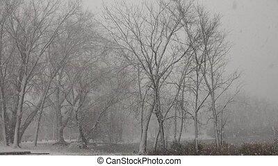 Public Park During Snow Storm