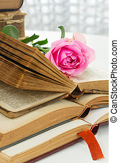 Old books with rose flower - Pile of old books with fresh...