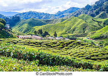 Village between tea plantations, Cameron highlands - Village...
