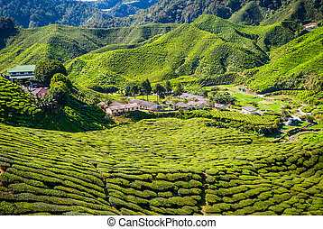 Village between tea plantations, Cameron highlands - Village...
