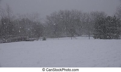 Park During Snow Storm
