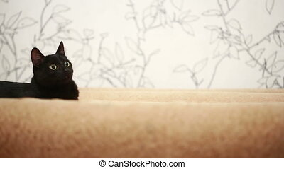 big black cat laying on bed