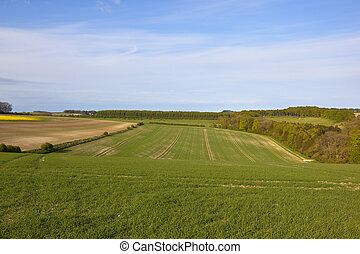 yorkshire wolds scenery - agricultural scenery in springtime...
