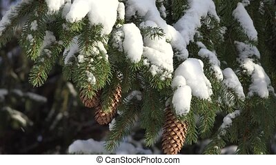 Fir Tree Covered With Snow