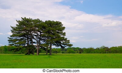 Green Meadow with Six Pines in the Middle in Askania-Nova,...