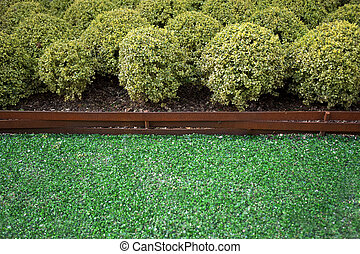 Boxwood in a garden - Boxwood shrubs in a garden with glass...