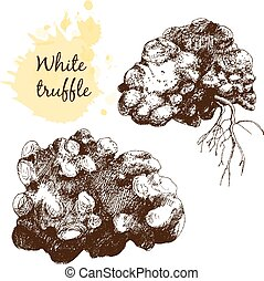 White truffles group isolated on white. Hand drawn graphic...