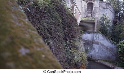 Green moss on old stone wall and fly dove