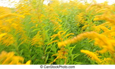 Dip in yellow-green color. Camera moves in dense thickets of...